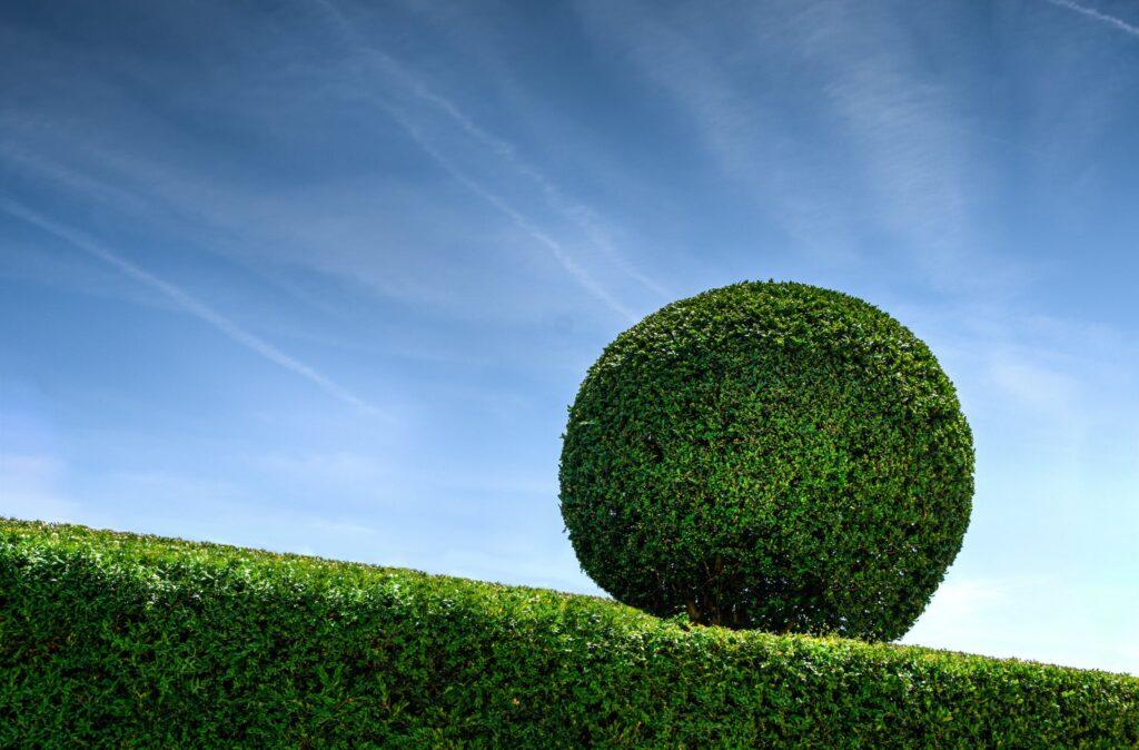 Fysisk hæk - hedge. Hvad er et finansielt hedge og hvordan benyttes hedging inden for investering? Artiklen her giver dig svaret på det.